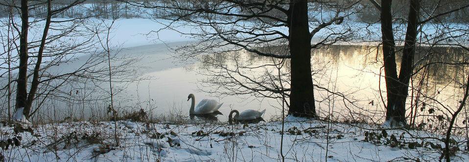 Djurvänliga vintertips